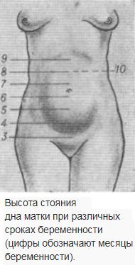 Высота стояния дна матки на разных сроках беременности