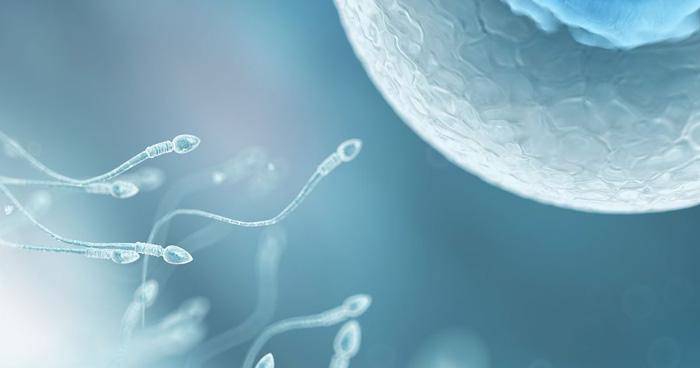 Качество сперматозоидов 30