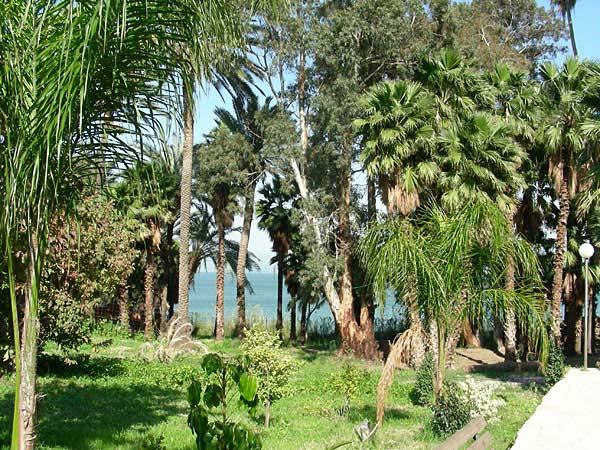Сад подворья Горненского монастыря в Магдале