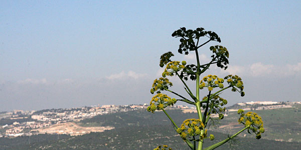 Вид на Назарет с горы Фавор